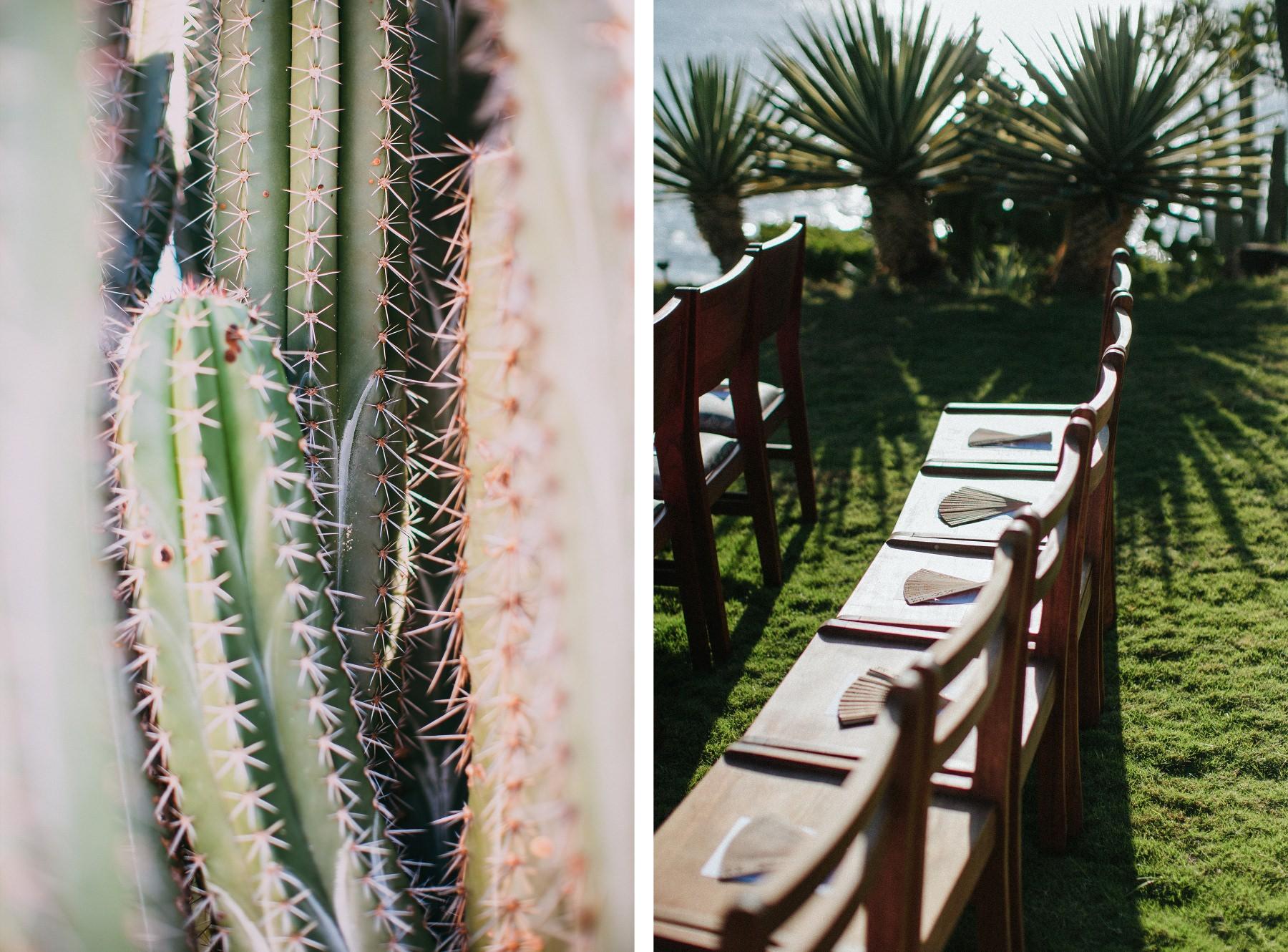 Wedding details , Decoration, cactus